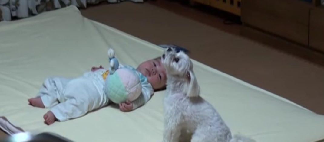 ДИРЉИВО – БЕБА ЈЕ ПОЧЕЛА ДА ПЛАЧЕ: Погледајте невероватну реакцију пса! (ВИДЕО)